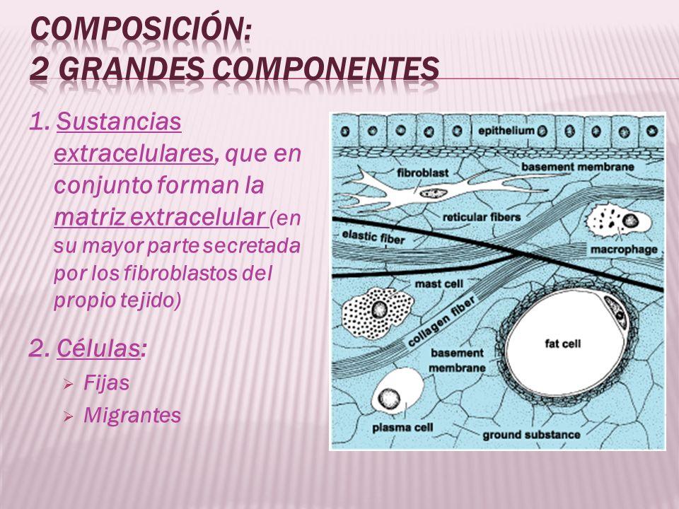 Composición: 2 grandes componentes