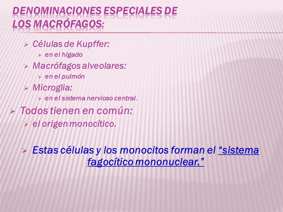 Denominaciones especiales de los macrófagos: