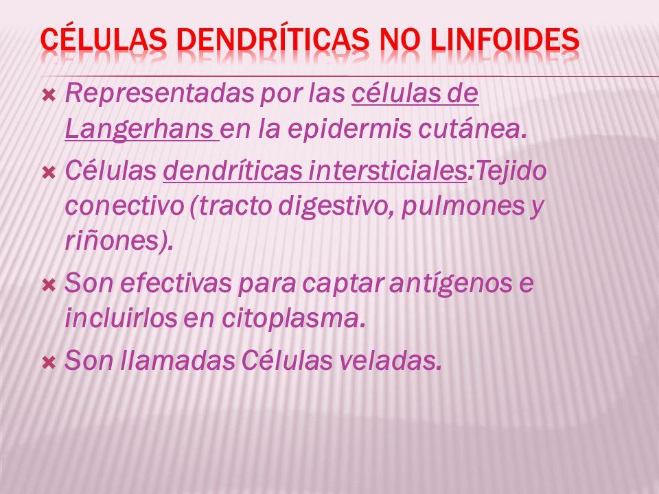 Células dendríticas no linfoides