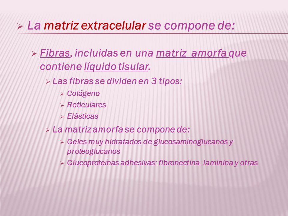 La matriz extracelular se compone de: