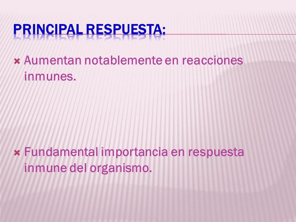 Principal respuesta: Aumentan notablemente en reacciones inmunes.