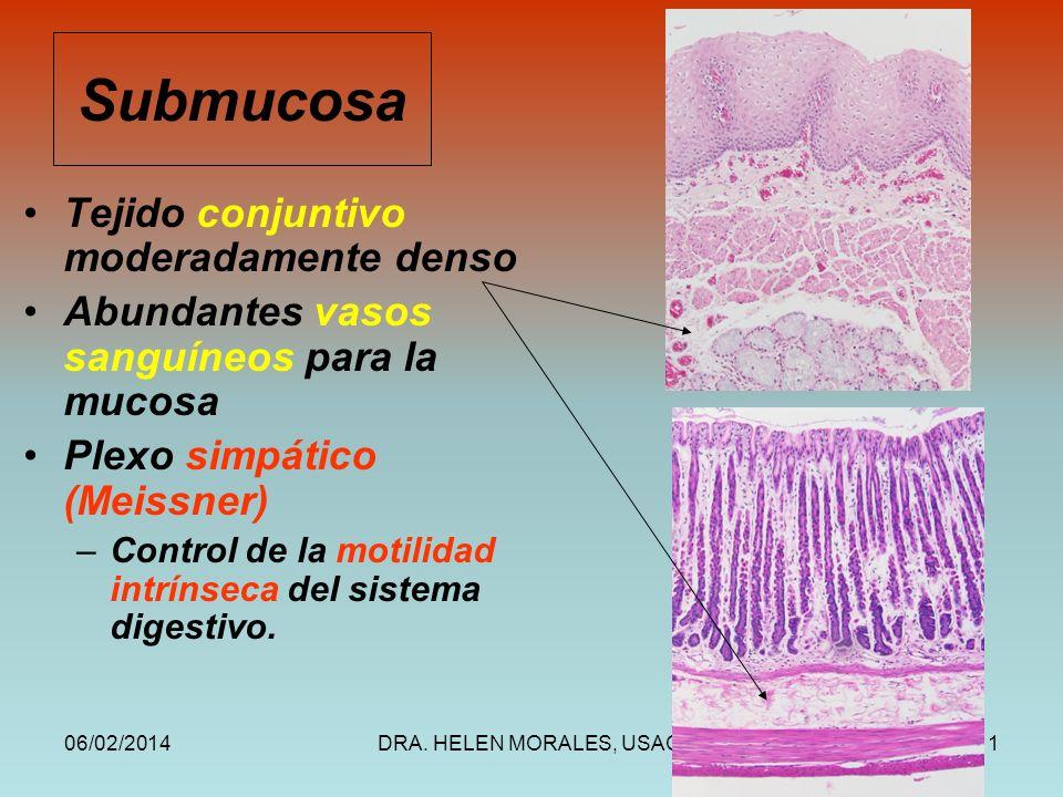 Submucosa Tejido conjuntivo moderadamente denso