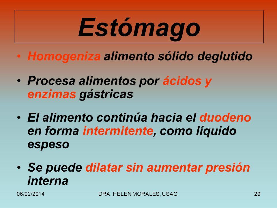 Estómago Homogeniza alimento sólido deglutido