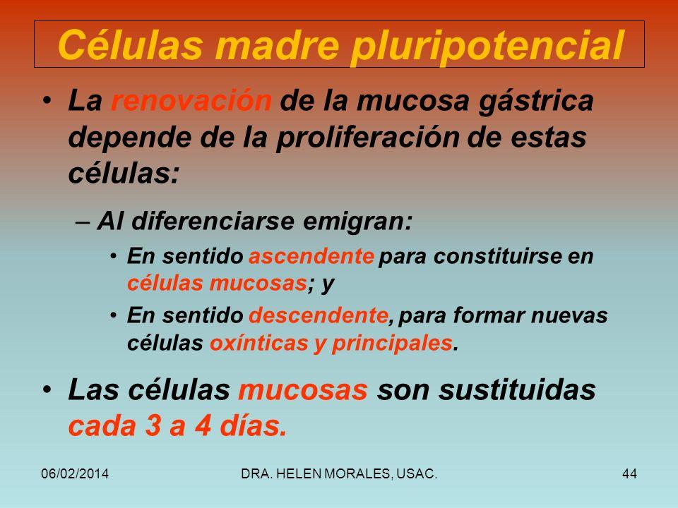 Células madre pluripotencial