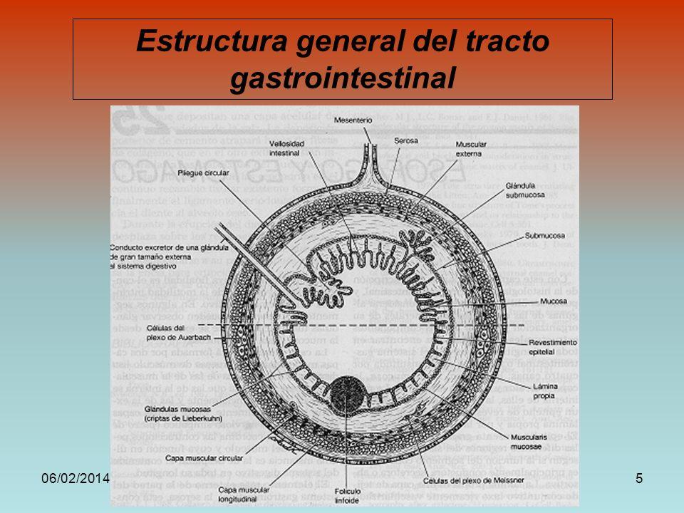 Estructura general del tracto gastrointestinal