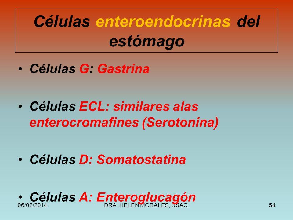 Células enteroendocrinas del estómago