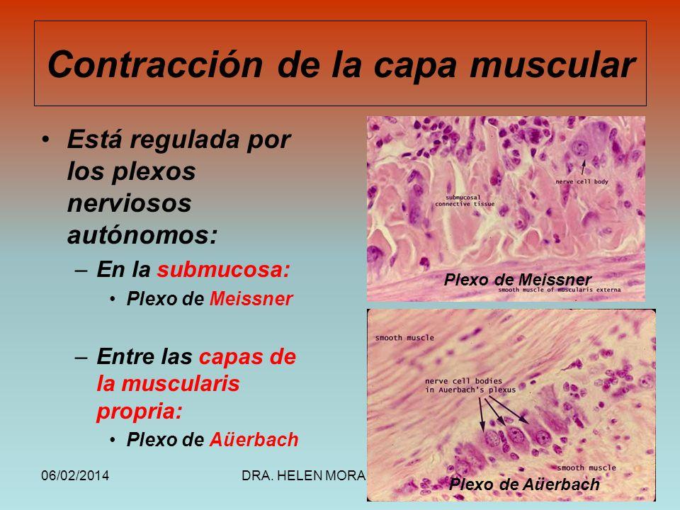 Contracción de la capa muscular