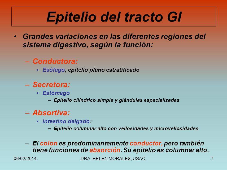 Epitelio del tracto GI Grandes variaciones en las diferentes regiones del sistema digestivo, según la función: