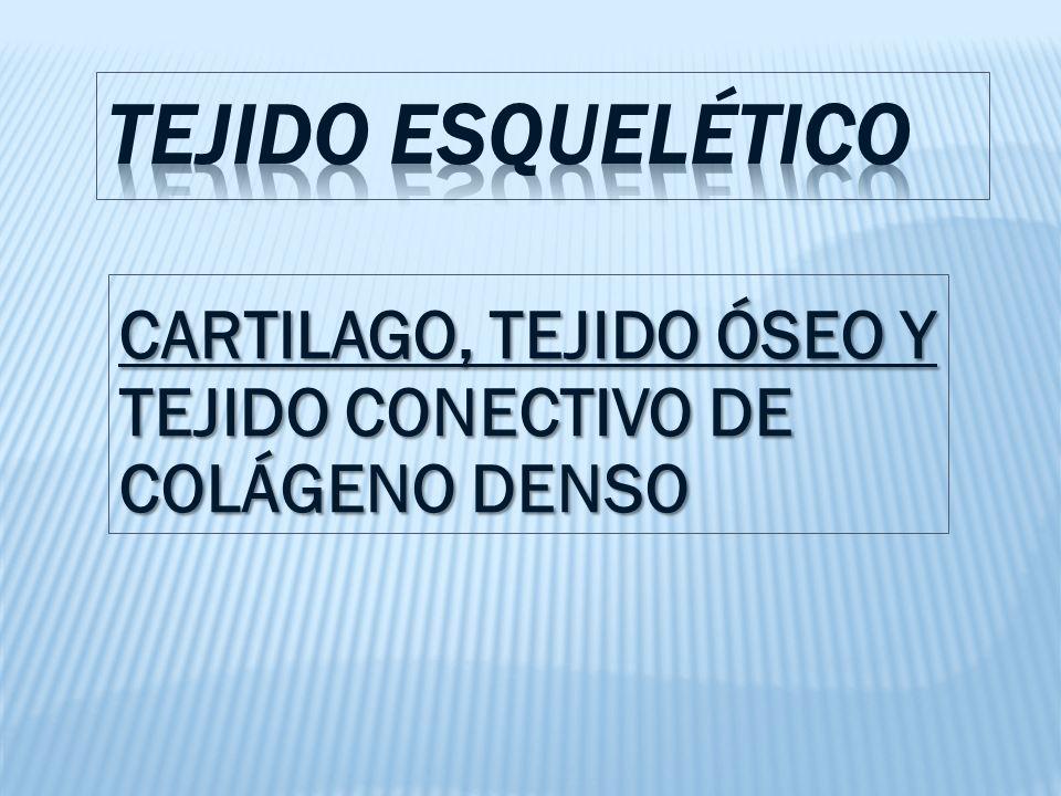 CARTILAGO, TEJIDO ÓSEO Y TEJIDO CONECTIVO DE COLÁGENO DENSO