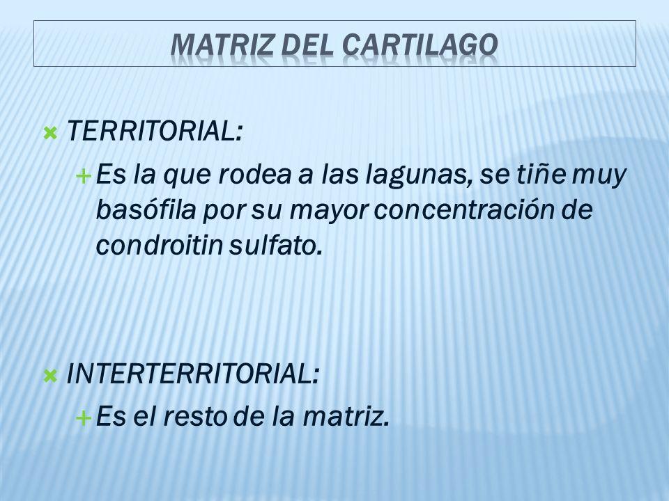 MATRIZ DEL CARTILAGO TERRITORIAL: