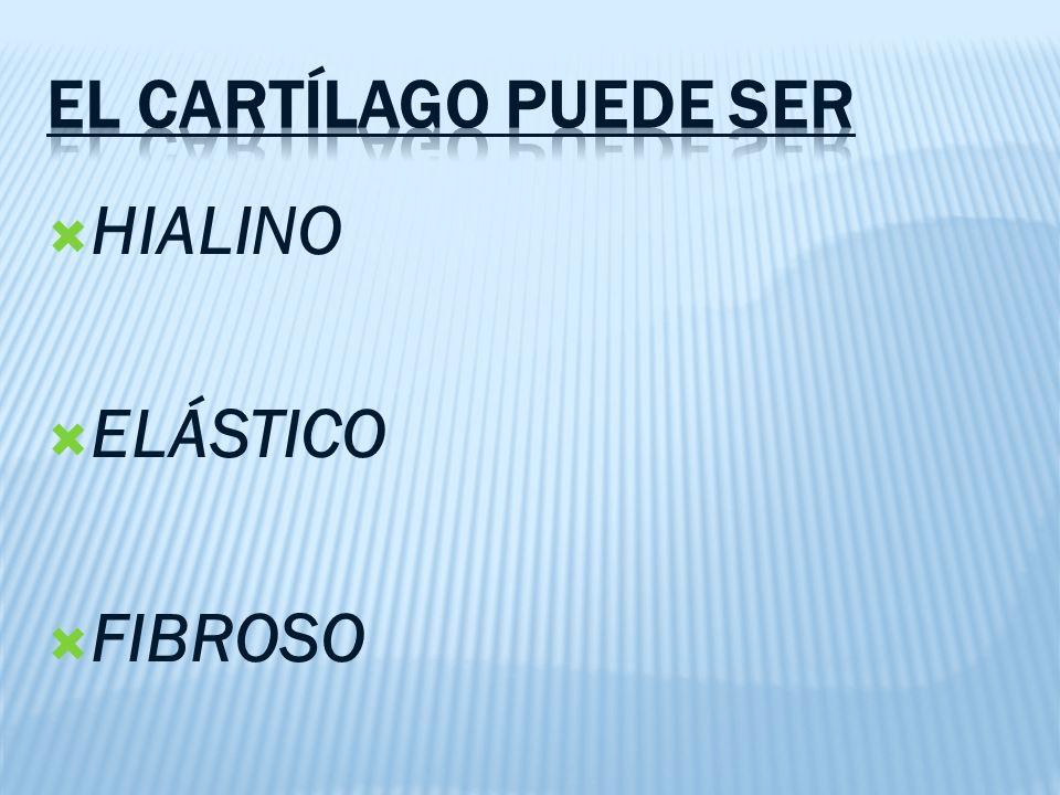 EL CARTÍLAGO PUEDE SER HIALINO ELÁSTICO FIBROSO