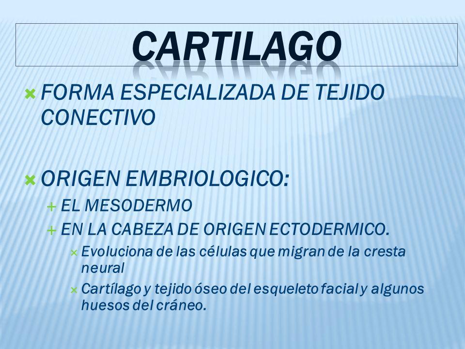 CARTILAGO FORMA ESPECIALIZADA DE TEJIDO CONECTIVO ORIGEN EMBRIOLOGICO: