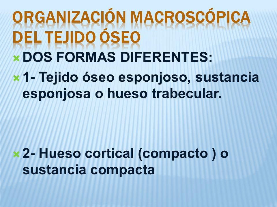 ORGANIZACIÓN MACROSCÓPICA DEL TEJIDO ÓSEO