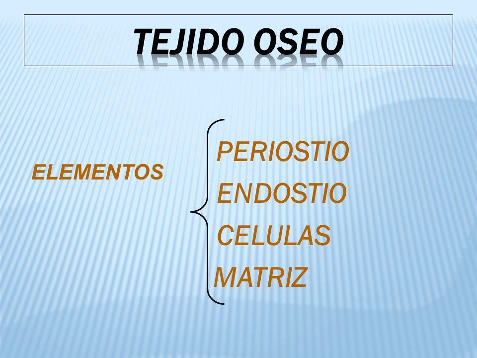 TEJIDO OSEO PERIOSTIO ENDOSTIO CELULAS MATRIZ ELEMENTOS