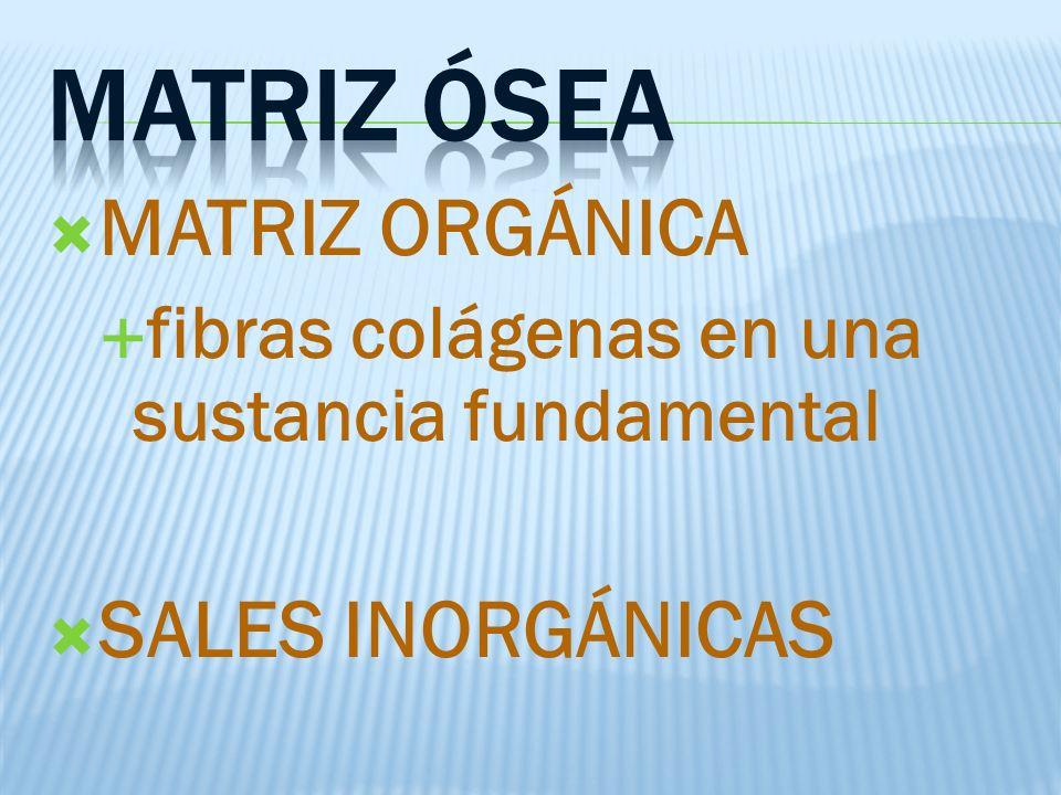 MATRIZ ÓSEA MATRIZ ORGÁNICA SALES INORGÁNICAS