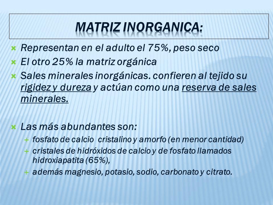 MATRIZ INORGANICA: Representan en el adulto el 75%, peso seco