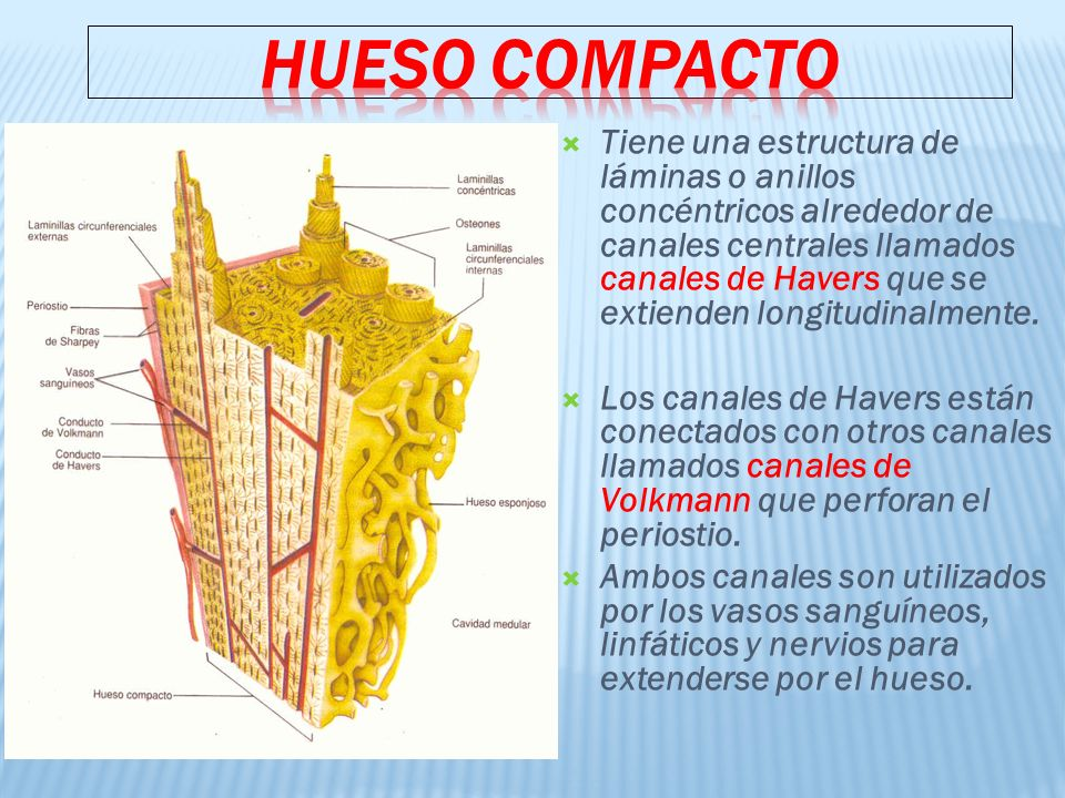 HUESO COMPACTO