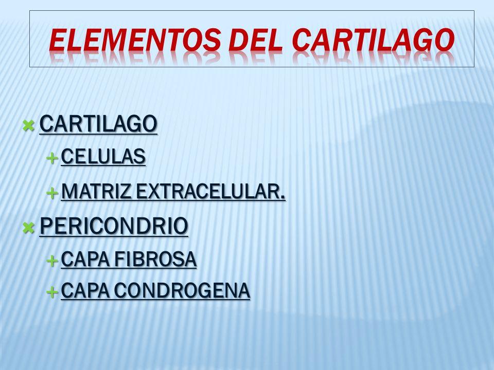 ELEMENTOS DEL CARTILAGO