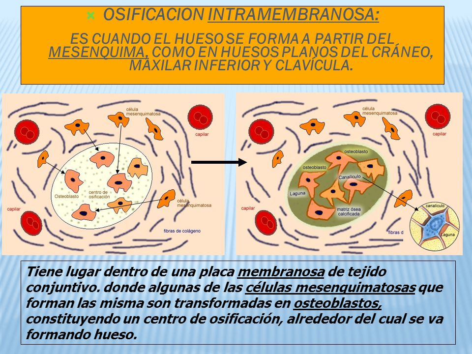 OSIFICACION INTRAMEMBRANOSA: