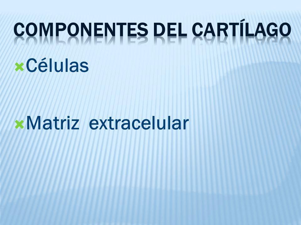 Componentes del cartílago