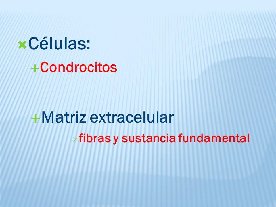 Células: Matriz extracelular Condrocitos