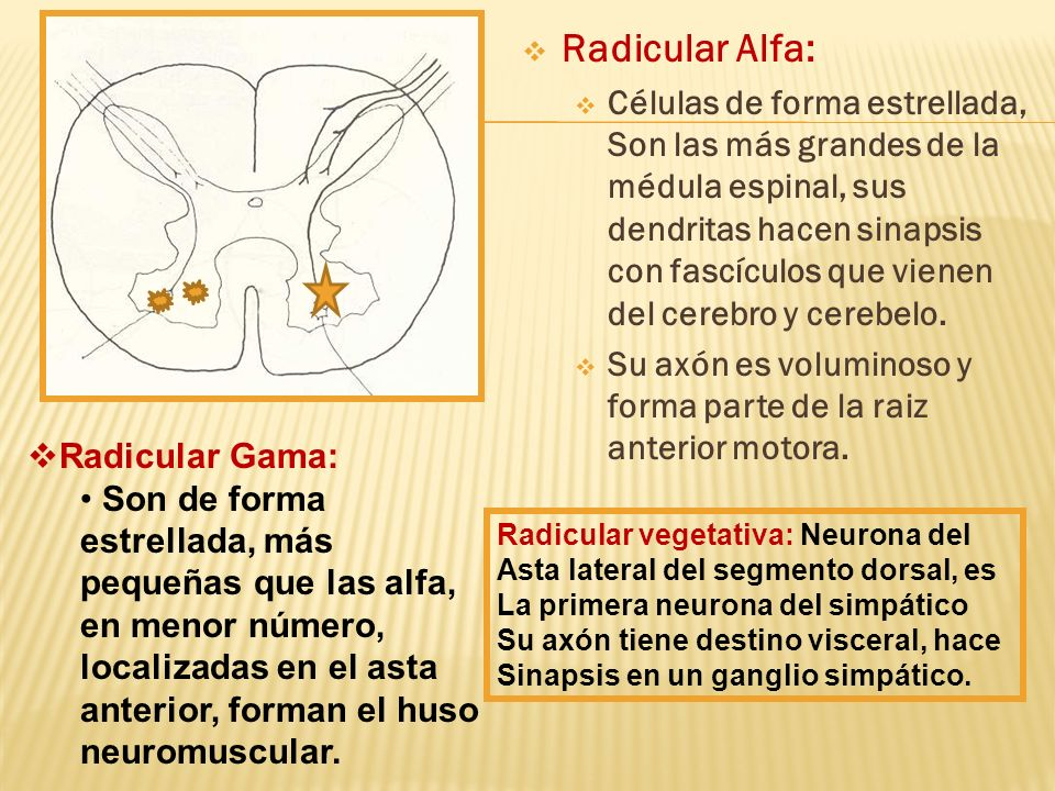 Radicular Alfa:
