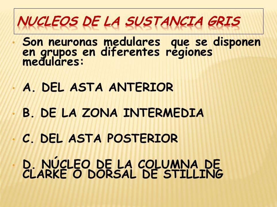 NUCLEOS DE LA SUSTANCIA GRIS