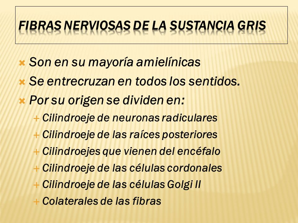 FIBRAS NERVIOSAS DE LA SUSTANCIA GRIS