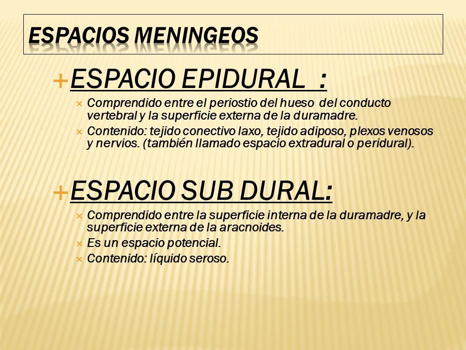 ESPACIO EPIDURAL : ESPACIO SUB DURAL: ESPACIOS MENINGEOS