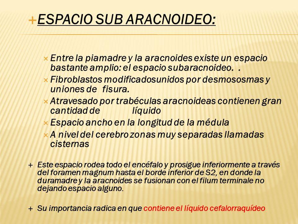 ESPACIO SUB ARACNOIDEO: