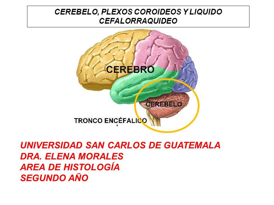 CEREBELO, PLEXOS COROIDEOS Y LIQUIDO CEFALORRAQUIDEO