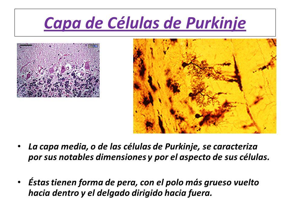 Capa de Células de Purkinje