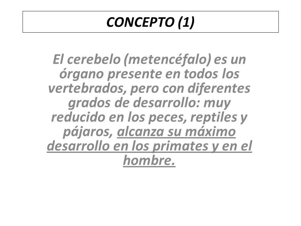 CONCEPTO (1)