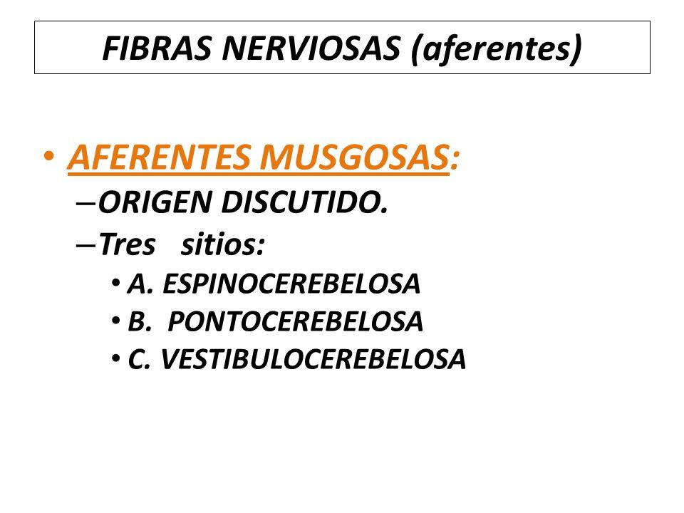 FIBRAS NERVIOSAS (aferentes)