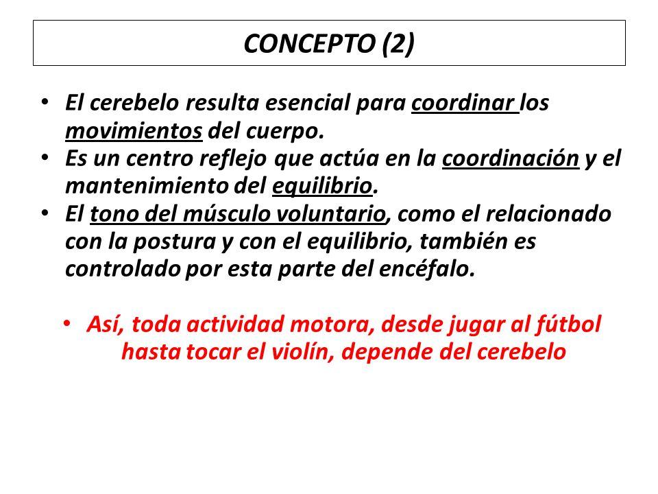 CONCEPTO (2) El cerebelo resulta esencial para coordinar los movimientos del cuerpo.