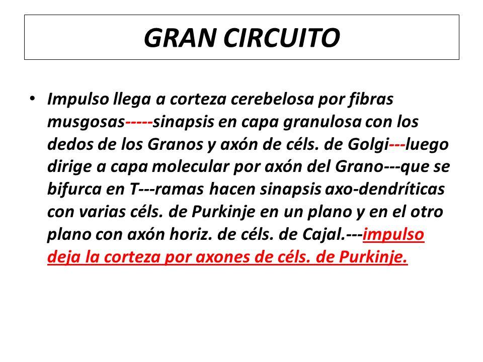 GRAN CIRCUITO