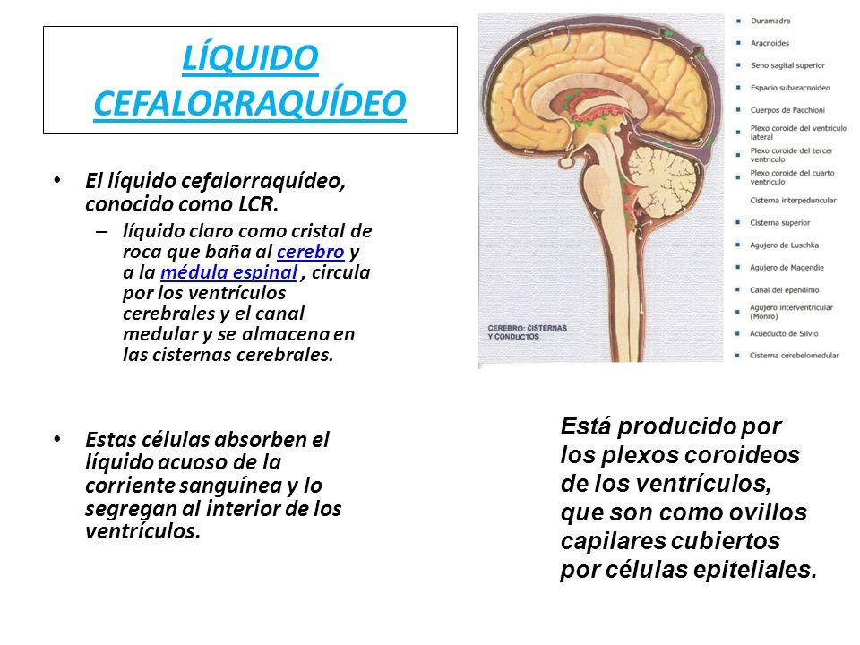 LÍQUIDO CEFALORRAQUÍDEO