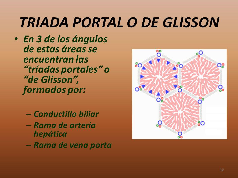 TRIADA PORTAL O DE GLISSON