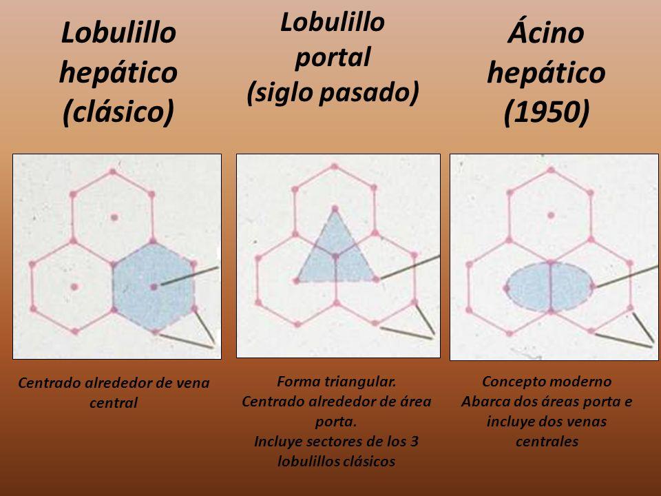 Lobulillo hepático (clásico)