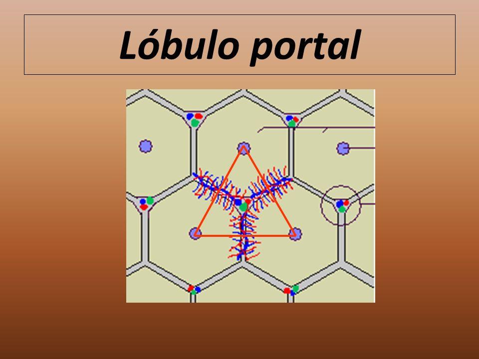 Lóbulo portal
