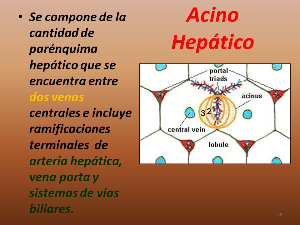 Se compone de la cantidad de parénquima hepático que se encuentra entre dos venas centrales e incluye ramificaciones terminales de arteria hepática, vena porta y sistemas de vías biliares.
