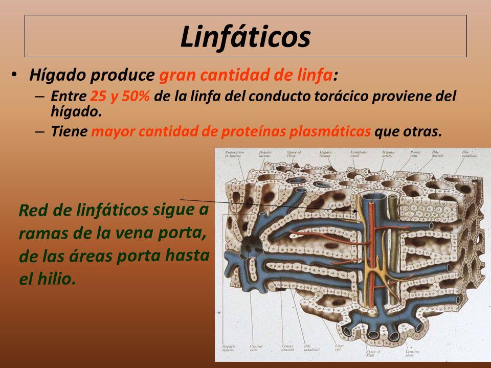 Linfáticos Hígado produce gran cantidad de linfa: