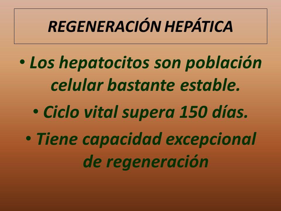 REGENERACIÓN HEPÁTICA