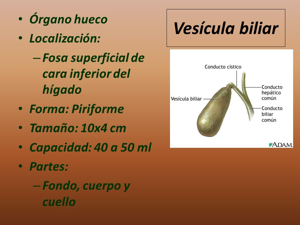 Vesícula biliar Órgano hueco Localización: