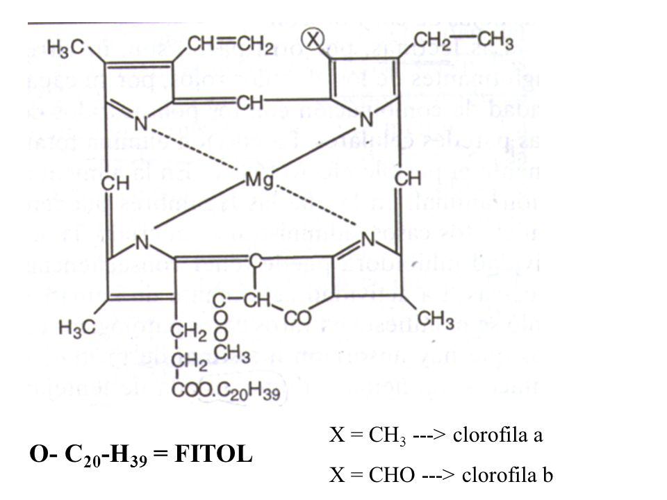 O- C20-H39 = FITOL X = CH3 ---> clorofila a