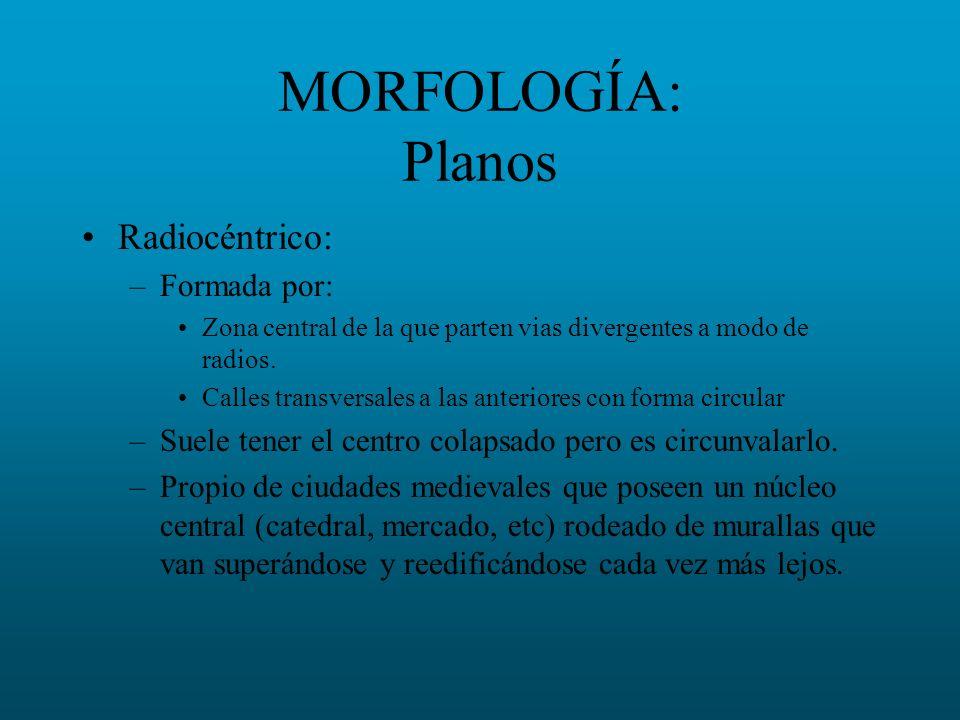 MORFOLOGÍA: Planos Radiocéntrico: Formada por: