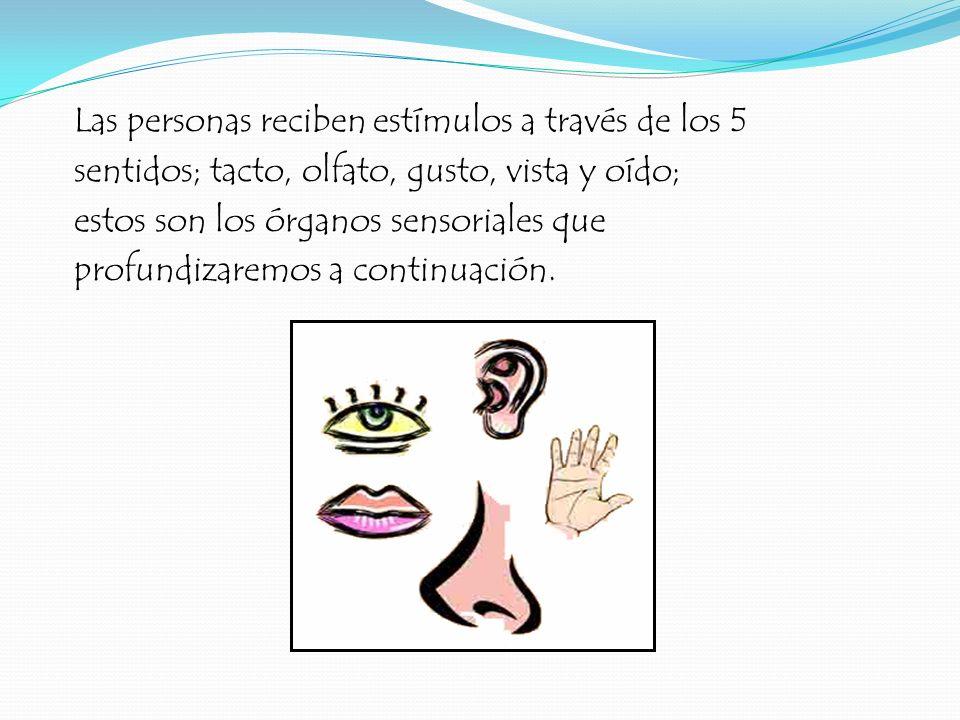 Las personas reciben estímulos a través de los 5 sentidos; tacto, olfato, gusto, vista y oído; estos son los órganos sensoriales que profundizaremos a continuación.