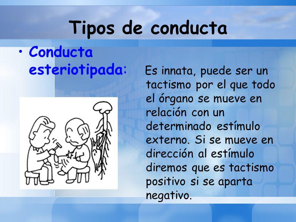 Tipos de conducta Conducta esteriotipada: