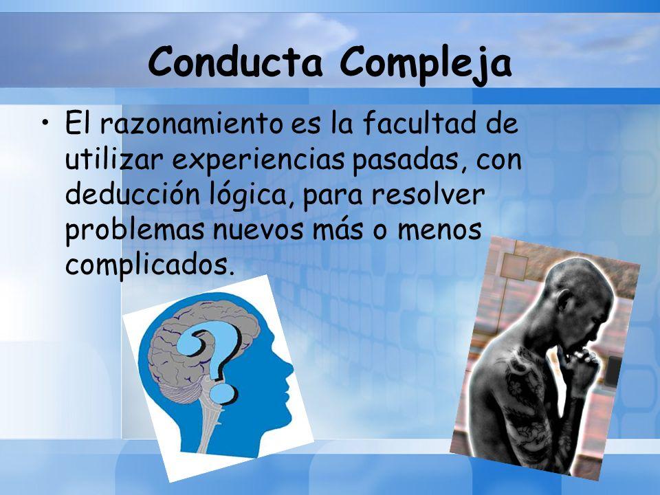 Conducta Compleja