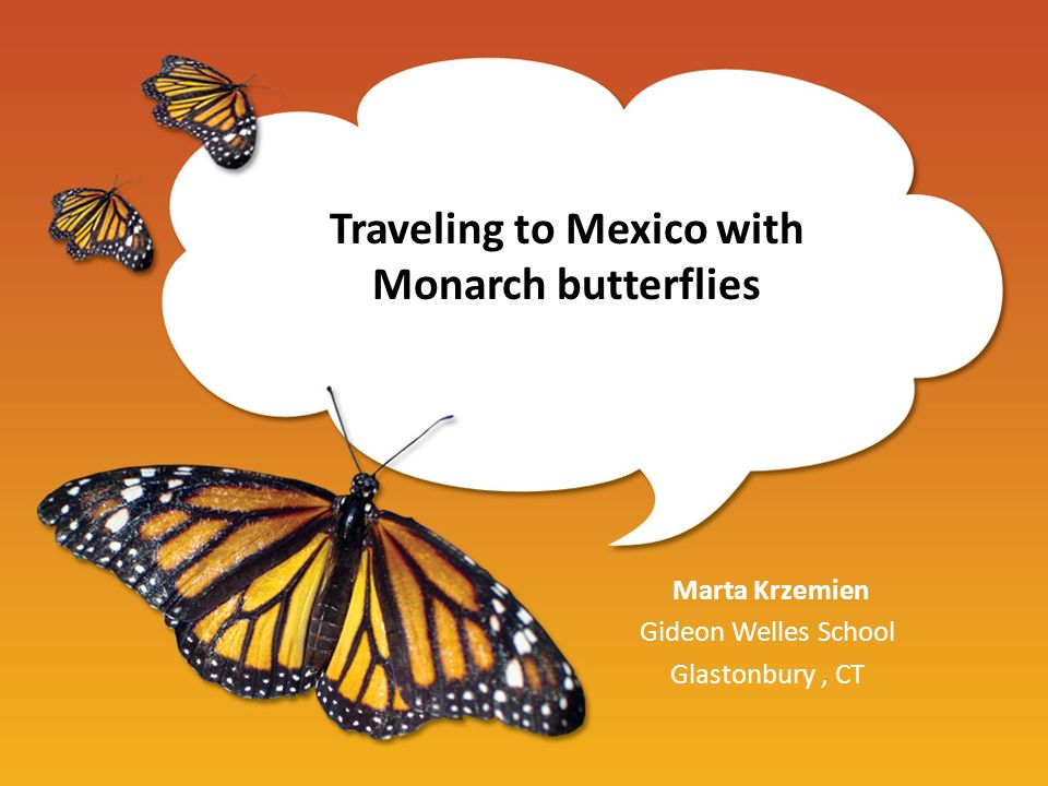 Traveling to Mexico with Monarch butterflies